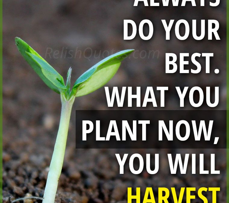 """Always do your best. What you plant now, you will harvest later."""